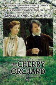 The Cherry Orchard (1999) online movies με ελληνικούσ υπότιτλουσ